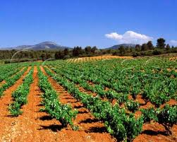 Requena Wineries